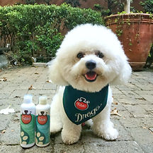 Drogo the Bichon sells Fetch! Neem Natural Pet Care Products