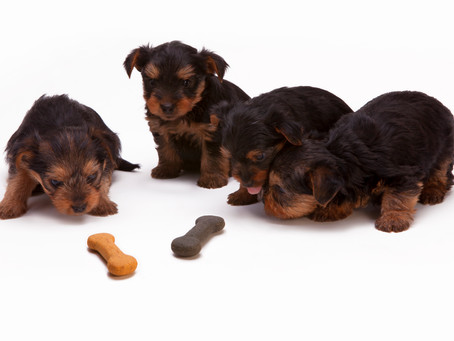 What to Watch Out For When Buying Pet Food