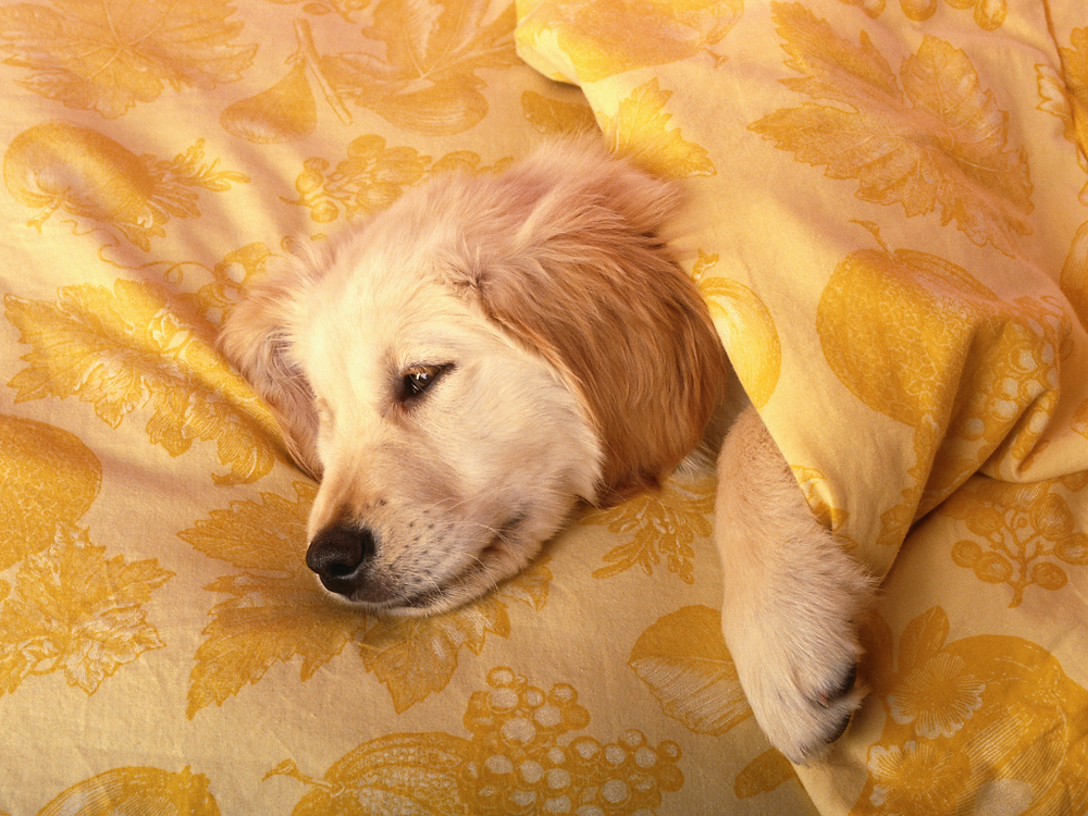Fetch Naturals encourages you to keep pet beds clean to avoid bacteria growth which may affect the dog
