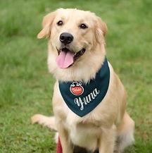 Neem Natural Pet Care reseller