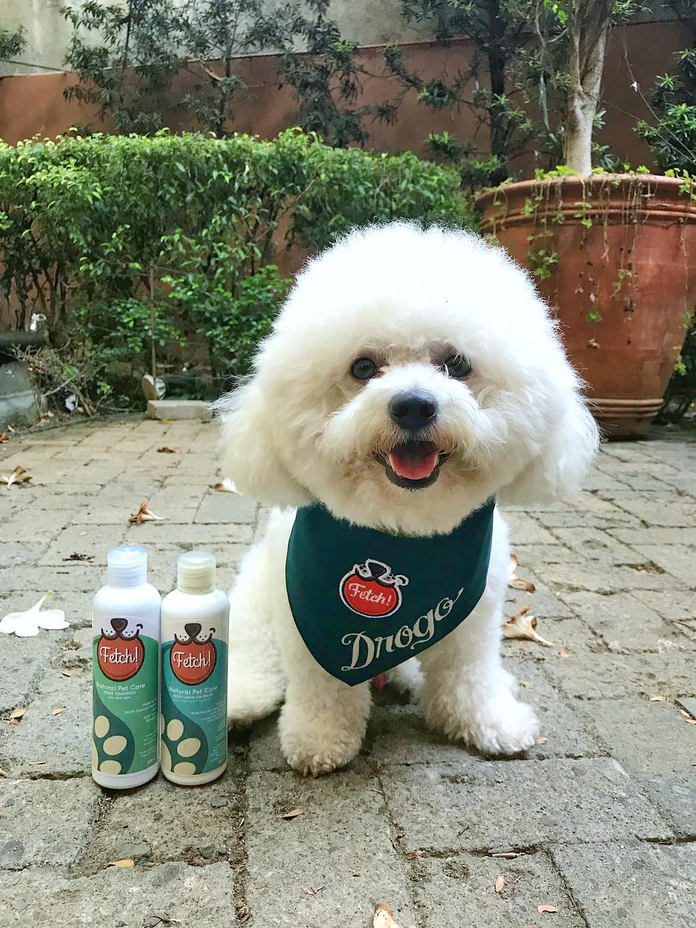 Drogo the Bichon is Fetch!'s Petpreneur for Makati