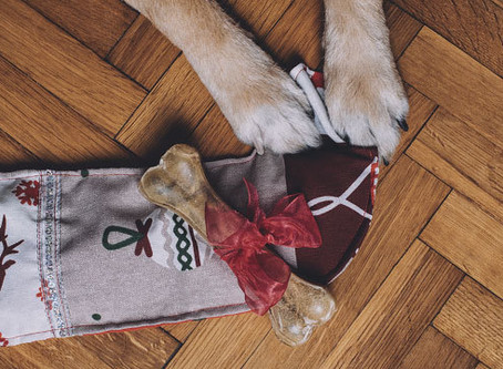9 Christmas gifts ideas for the dog lovers (and dogs) in your life