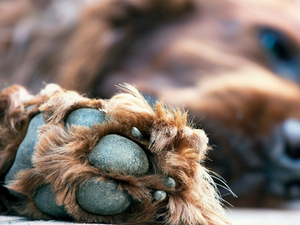 Fetch! Naturals encourages pet owners to keep pets' paws clean and dry to avoid any fungal infection