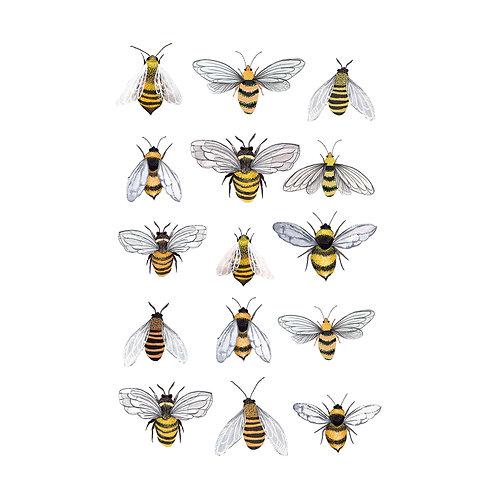 A3 Bumble Bee Print