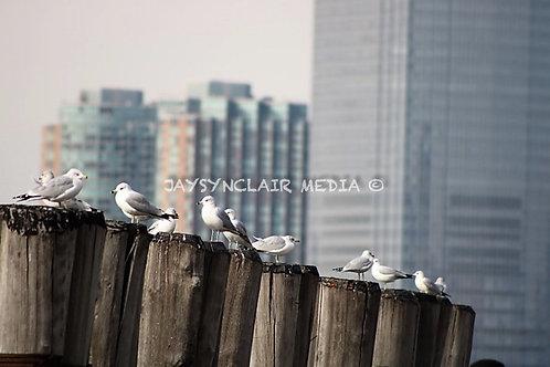 Bird Watchin'