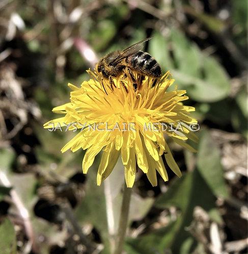 Pollen Madness