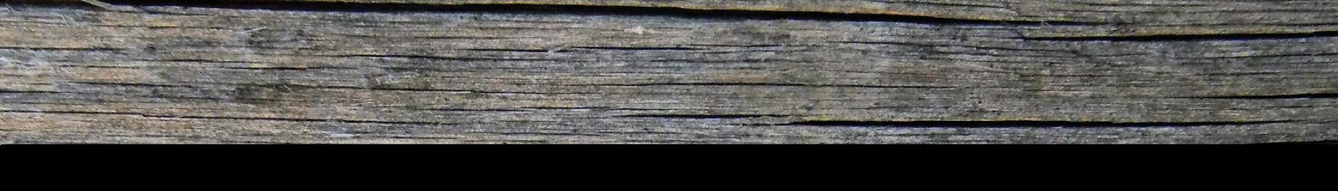 driftwood strip-01.png