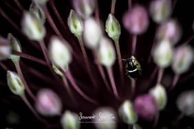 Insecte dans la lumière