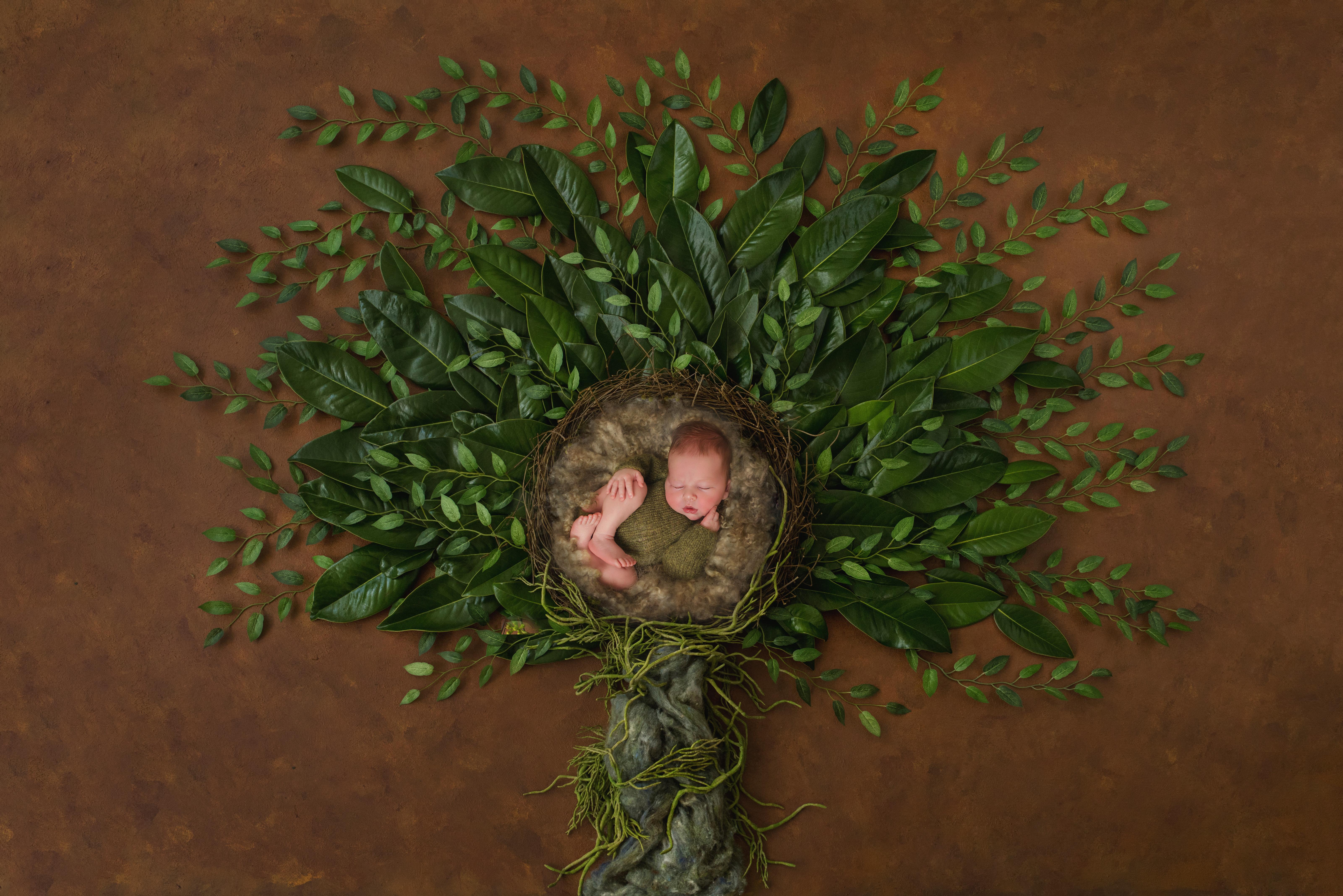 Daniel tree of life