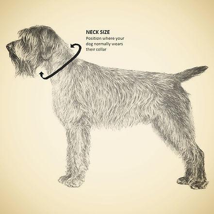 Dog Collar Sizing Guide