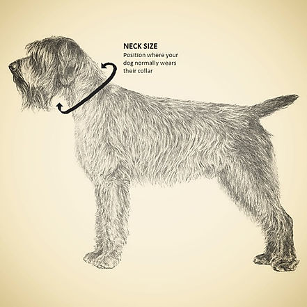 Dog Collar Sizing Guide