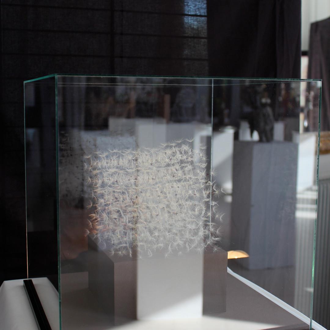 Cube de pissenlis dans sa boite de verre