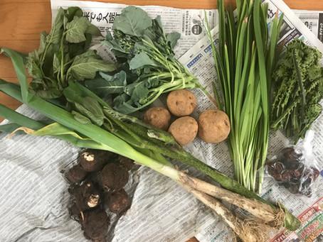 石森さんのオーガニック野菜箱