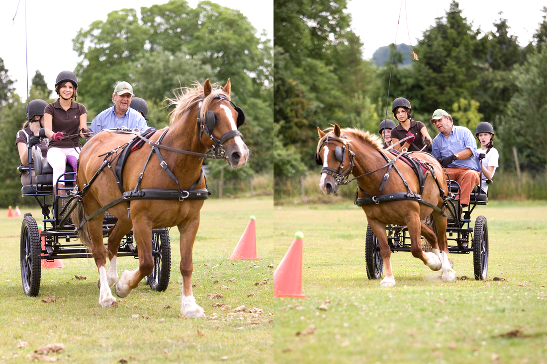 Warminster Carriage driving lessons