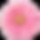 Pink Daisy 2