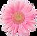 Yoni massage bangkok | Logo