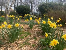 PCR 公园种植的花朵 / PCR Planting Flowers