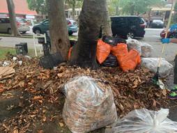 保护树木人人有责 / Everyone is responsible for protecting trees