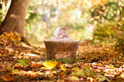 fall-basket-download