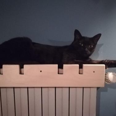 Cat Warmer