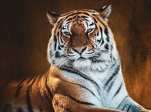 TigerFB%20square_edited.jpg