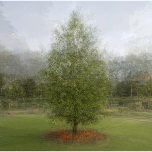 Spring Tree 3