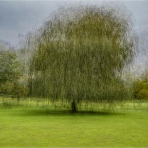 Summer Tree 4