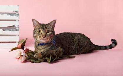 Jacksonville Pet Photographer, St. Augus
