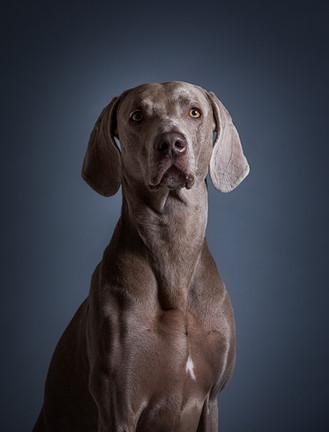 Nature's Pet Photography, Pet Photograph