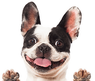 freedomAsset 9pup.png