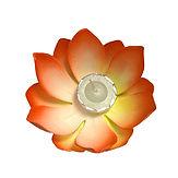 Orange Lotus.jpg