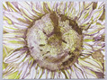 15-FibonacciSunflower-Litho.jpg