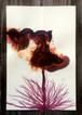 Imaginary Flower 46