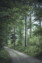 Andrej Grilc-4531.jpg