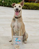 Coco sticks perro.jpg