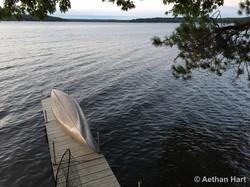 20150818-canoe hayward