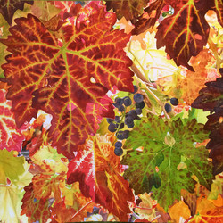 leaves_1000w