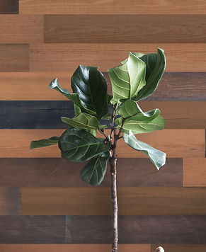 Grain Wood Brown: planks are made from thermo-treated Red Oak, which presents a rich grain structure and a deep Brown Color.