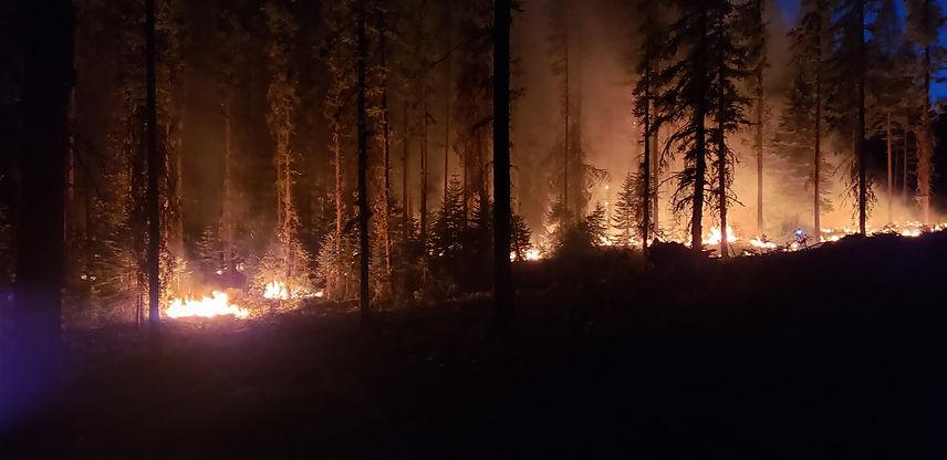 forest burning.jpg