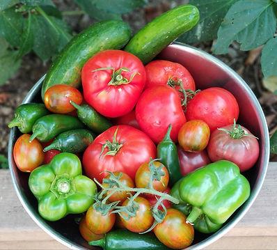 harvest of vegetables from backyard garden