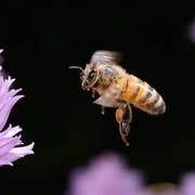 In volo nel mio giardino
