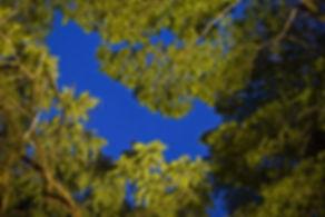 Copa de árvore com seu azul
