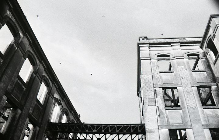 BejaCeleiro024.jpg