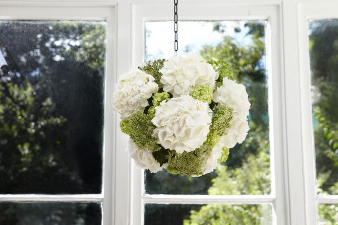Hanging Hydrangeas