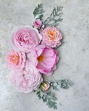 David Austin Skylark Rose