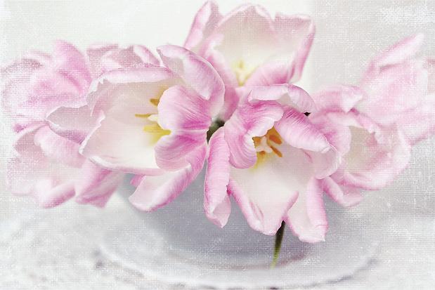 Sarah Gardner Textured Tulips