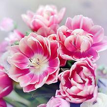 Columbus Tulips