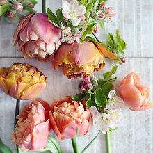 Copper Image Tulips