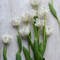 Liberstar Tulips