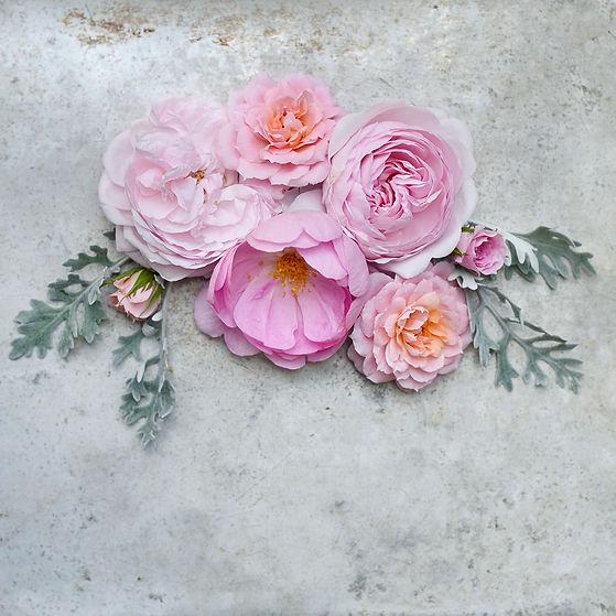 Sarah Gardner Roses